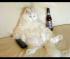 Αστείες γατούλες (Βίντεο)