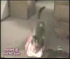 Αστεία γατάκια (Βίντεο)