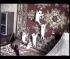 Αστεία γατάκια #2(Βίντεο)